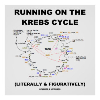 Running On The Krebs Cycle (Science Humor) Poster