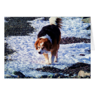 Running On The Snowfield Greeting Cards