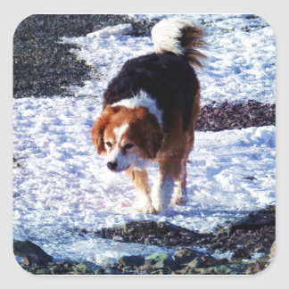 Running On The Snowfield Square Sticker