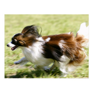 Running Papillon Postcard