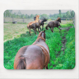 Running Pinto Paint Gelding & Chestnut Stallions Mouse Pad