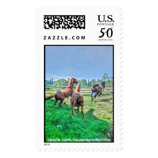 Running Pinto Paint Gelding & Chestnut Stallions Postage