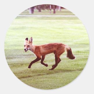 running red fox photograph classic round sticker