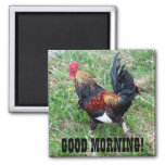 Running Rooster Magnet