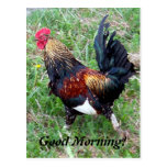 Running Rooster Postcard
