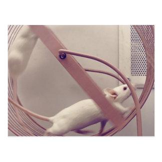 Running Wheel Mice Postcard
