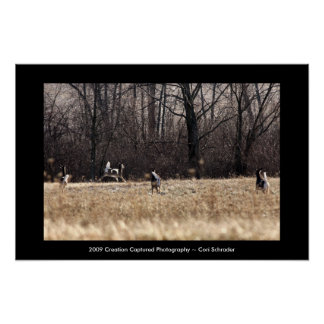 Running Whitetail Poster