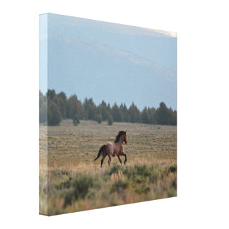 Running Wild Roan Canvas Print