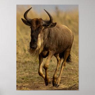 Running Wildebeest Posters