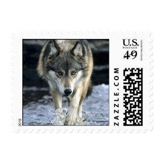 Running Wolf Postage Stamps