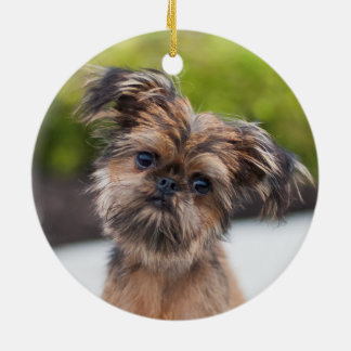 Rup Up and Go Brussels Griffon Ornament