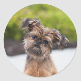 Rup Up and Go Brussels Griffon Sticker