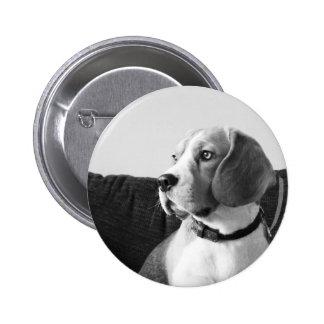 Rupert the Beagle Dog Badge Button