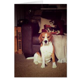 Rupert the Beagle Hound Dog Blank Greetings Card
