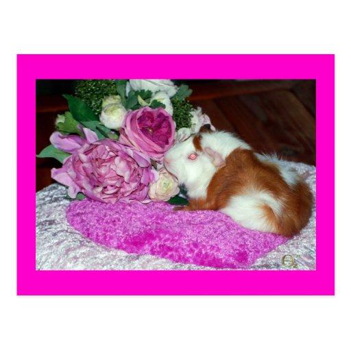 Rupert y rosas - conejillo de Indias Tarjetas Postales