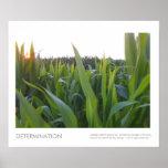 Rural Corn Field Tassling Photo Print