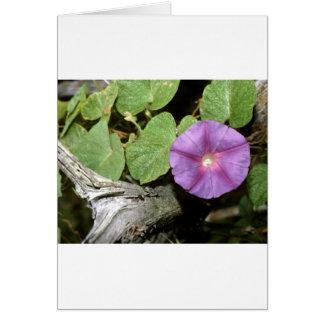 Rural Flora decorative Ozark mt Smokey mt Rocky M Card