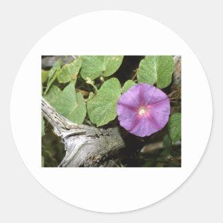 Rural Flora decorative Ozark mt Smokey mt Rocky M Classic Round Sticker