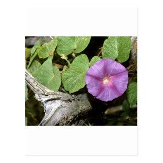 Rural Flora decorative Ozark mt Smokey mt Rocky M Postcard