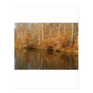 Rural Reflections Postcard