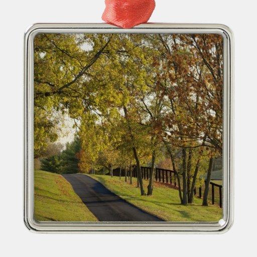 Rural road through Bluegrass region of Kentucky 2 Christmas Tree Ornaments