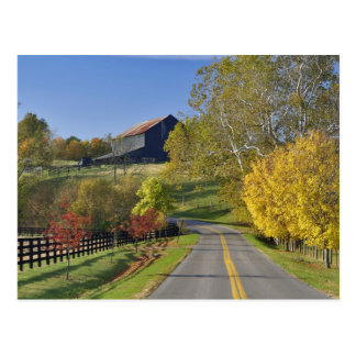 Rural road through Bluegrass region of Kentucky Postcard
