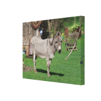 Rural Still Life With Donkey Canvas Print