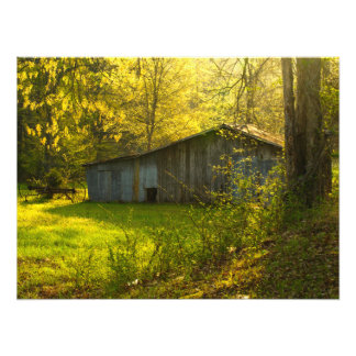 Rural Tennessee Spring Morning Light Photo Print