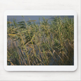 Rushes.jpg Mouse Pad