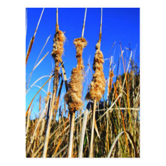 Rushes Postcard