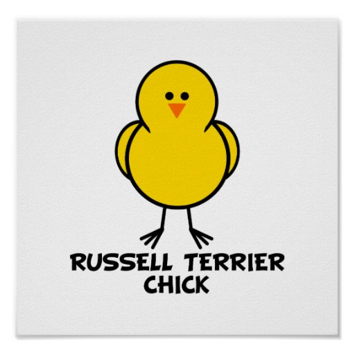 Russell Terrier Chick Poster