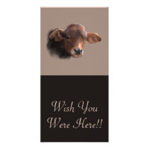 Russet Brown Cow Portrait Card