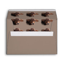 Russet Brown Cow Portrait Envelope