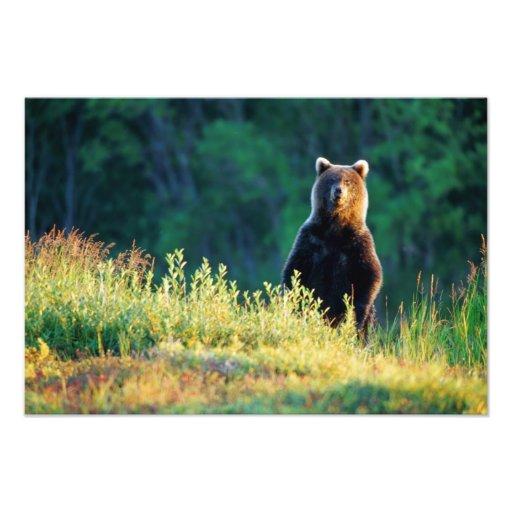 Russia, Kamchatka, grizzly of Kroska Art Photo