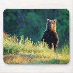 Russia, Kamchatka, grizzly of Kroska Mousepads