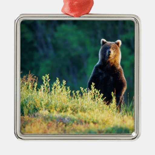 Russia, Kamchatka, grizzly of Kroska Ornaments