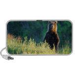 Russia, Kamchatka, grizzly of Kroska Notebook Speaker