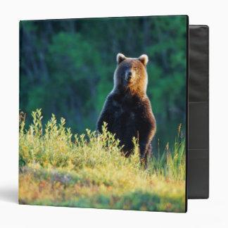 Russia, Kamchatka, grizzly of Kroska Vinyl Binder
