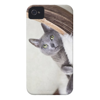 Russian Blue iPhone 4 Case-Mate Cases