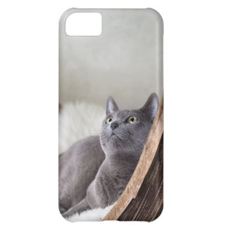 Russian Blue iPhone 5C Cases