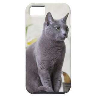 Russian Blue iPhone 5 Cases