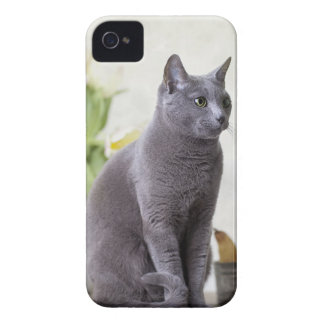 Russian Blue iPhone 4 Cover
