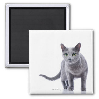 Russian Blue Cat 2 Inch Square Magnet