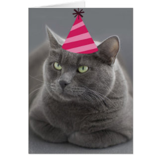 Russian Blue Cat Birthday Card Focus for a Cause