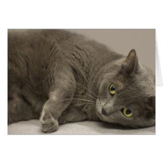 Russian Blue Cat Blank Note Card