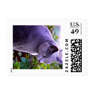 Russian Blue Cat postage