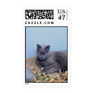Russian Blue Cat Postage Stamp