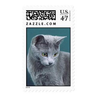 Russian blue cat stamp