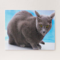 Russian Blue Cats. Jigsaw Puzzle