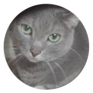 Russian Blue Gray Cat Dinner Plate